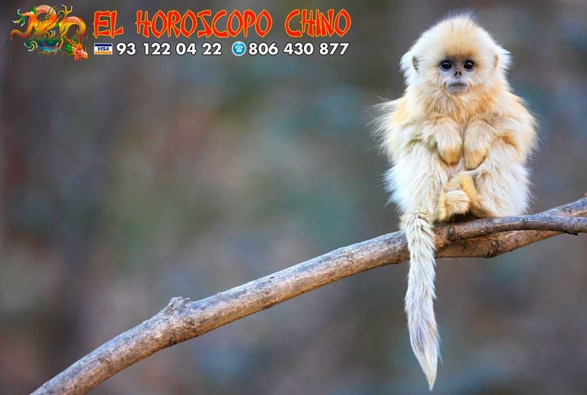 El Mono en el Horóscopo Chino 【2019】