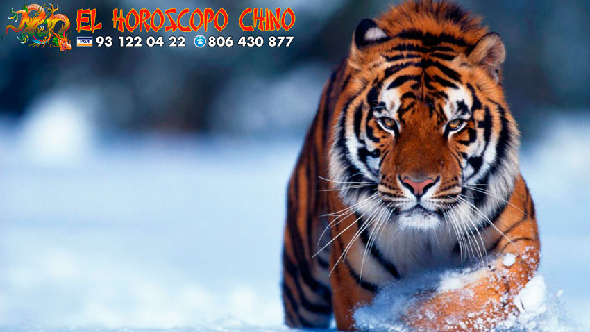 Tigre en el horóscopo chino